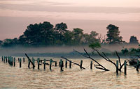Marsh Mist: copyright Michael Land Photography