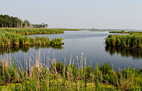 Blackwater Wetland: copyright Michael Land Photography