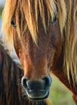 Wild Pony II: copyright Michael Land Photography