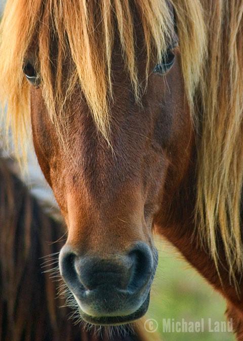 Wild Pony II