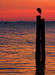 Sunrise Heron: copyright Michael Land Photography
