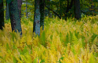 Ferns: copyright Michael Land Photography