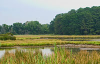 Eastern Neck Marsh: copyright Michael Land Photography