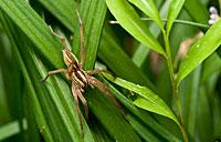 Grass Spider: copyright Michael Land Photography