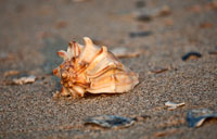 Seashell: copyright Michael Land Photography